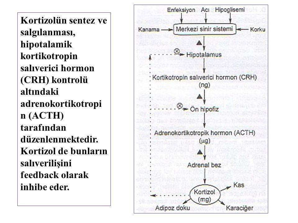 Kortizolün sentez ve salgılanması, hipotalamik kortikotropin salıverici hormon (CRH) kontrolü altındaki adrenokortikotropin (ACTH) tarafından düzenlenmektedir.