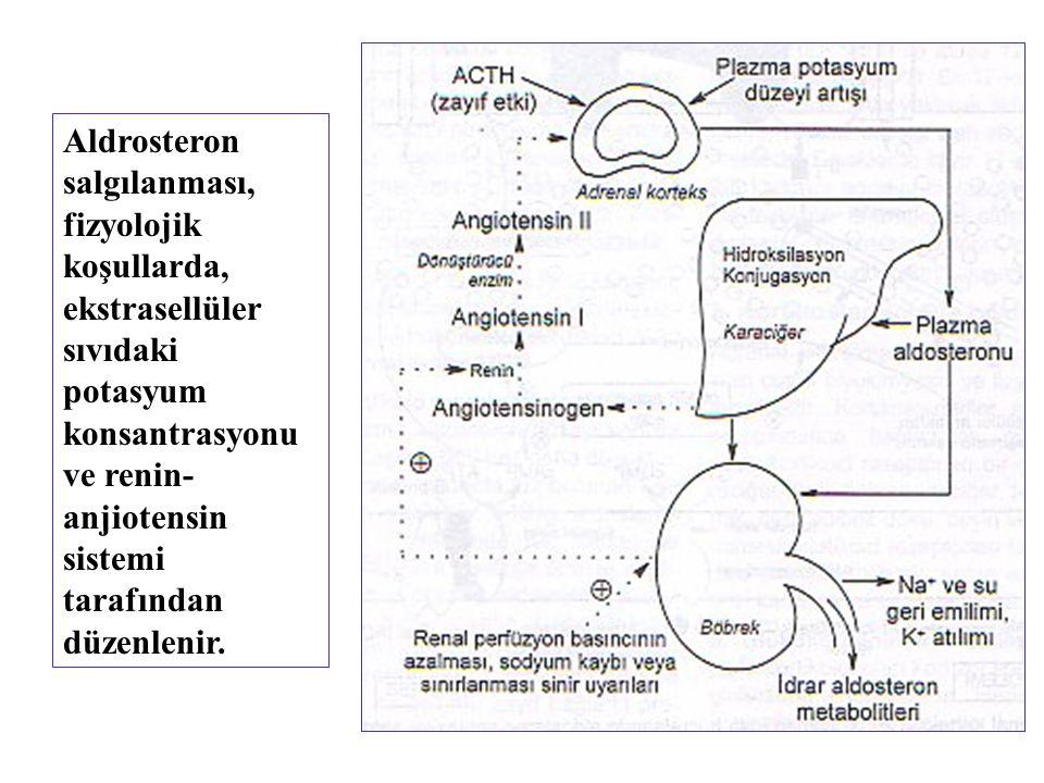 Aldrosteron salgılanması, fizyolojik koşullarda, ekstrasellüler sıvıdaki potasyum konsantrasyonu ve renin-anjiotensin sistemi tarafından düzenlenir.