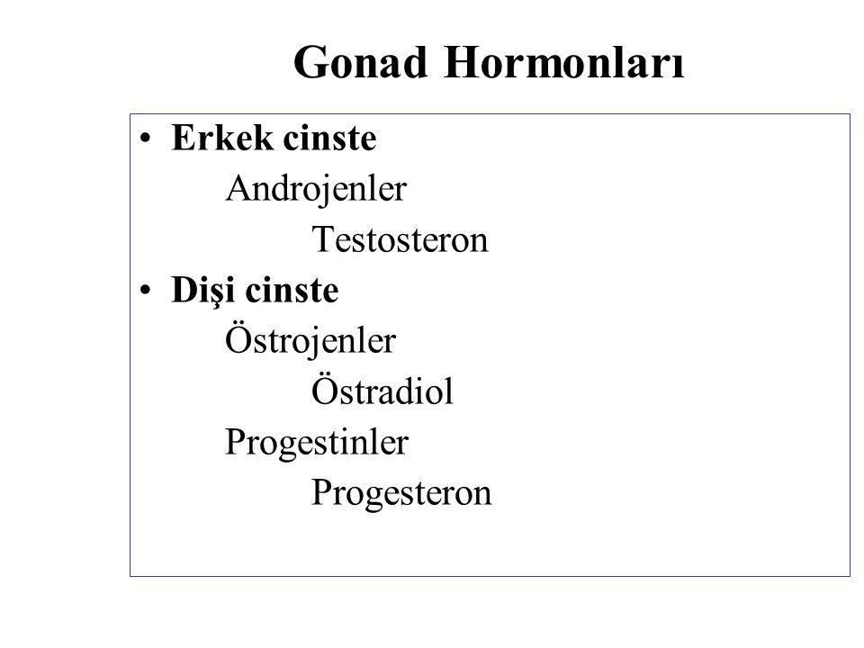 Gonad Hormonları Erkek cinste Androjenler Testosteron Dişi cinste