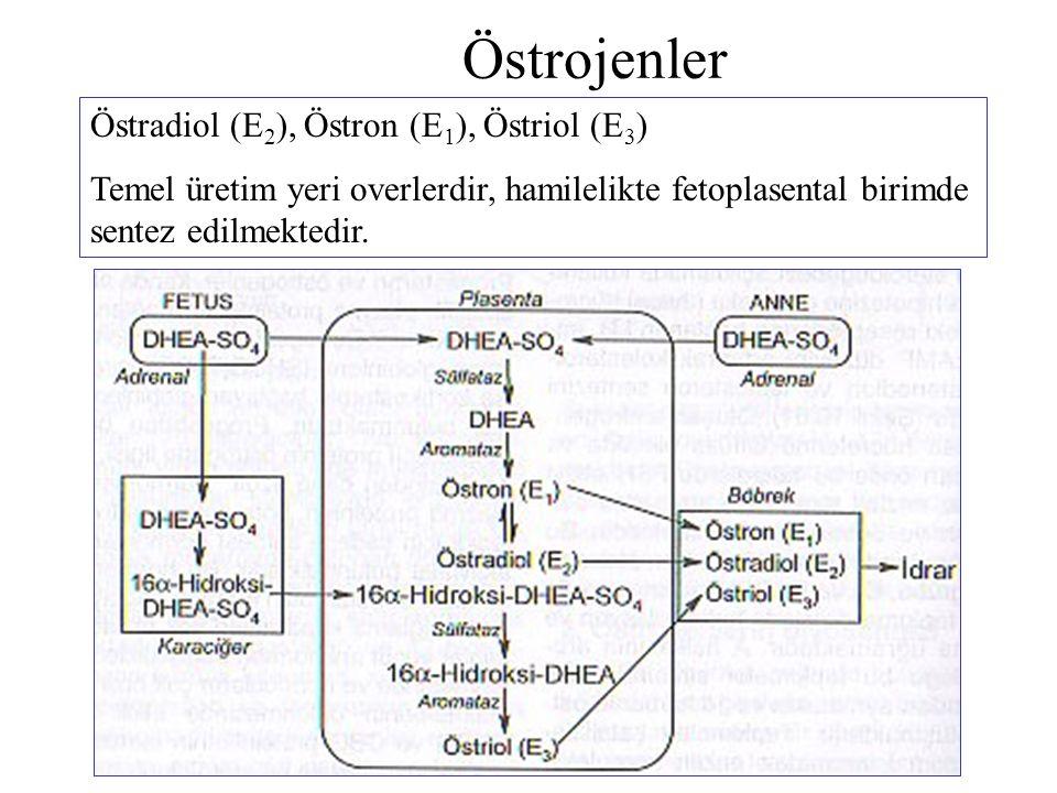 Östrojenler Östradiol (E2), Östron (E1), Östriol (E3)