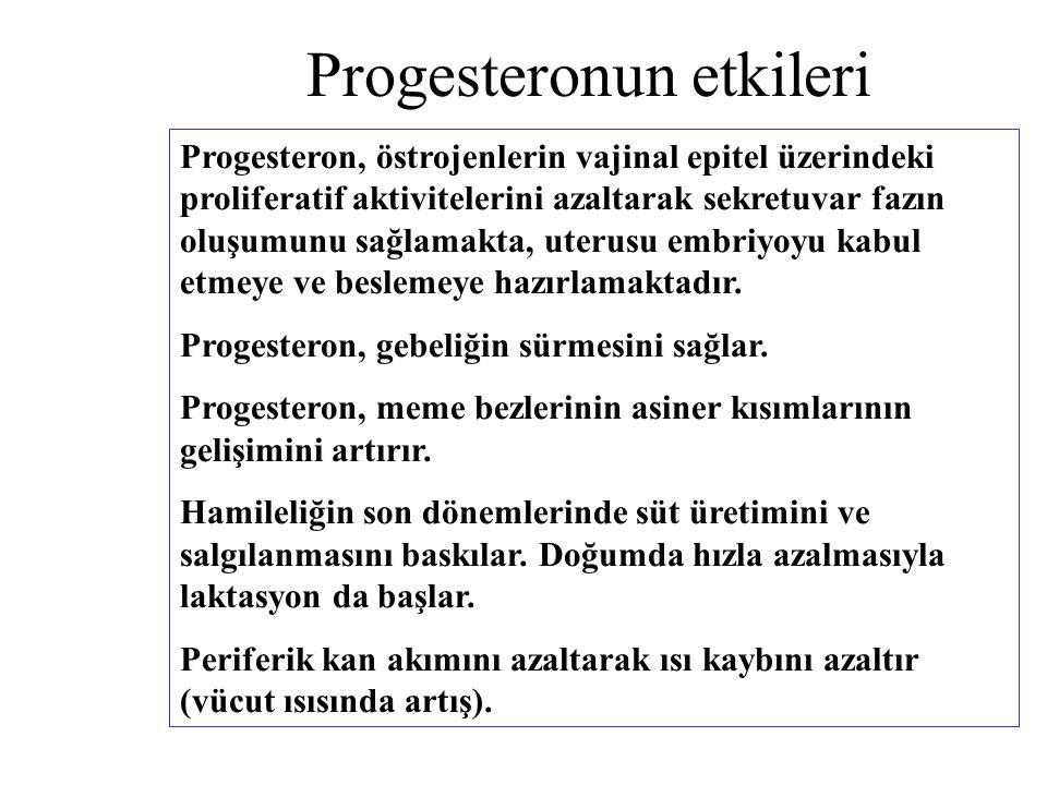 Progesteronun etkileri