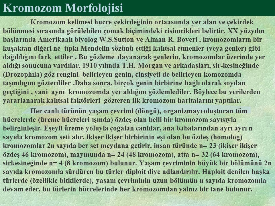 Kromozom Morfolojisi