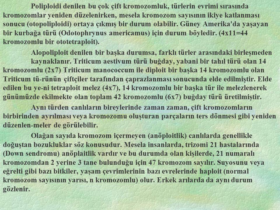 Poliploidi denilen bu çok çift kromozomluk, türlerin evrimi sırasında kromozomlar yeniden düzelenirken, mesela kromozom sayısının ikiye katlanması sonucu (otopoliploidi) ortaya çıkmış bir durum olabilir. Güney Amerika da yaşayan bir kurbağa türü (Odotophrynus americamus) için durum böyledir. (4x11=44 kromozomlu bir ototetraploit).