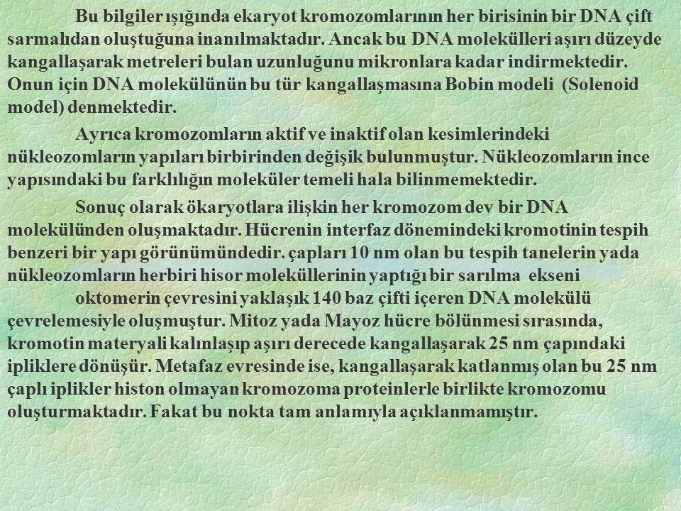 Bu bilgiler ışığında ekaryot kromozomlarının her birisinin bir DNA çift sarmalıdan oluştuğuna inanılmaktadır. Ancak bu DNA molekülleri aşırı düzeyde kangallaşarak metreleri bulan uzunluğunu mikronlara kadar indirmektedir. Onun için DNA molekülünün bu tür kangallaşmasına Bobin modeli (Solenoid model) denmektedir.