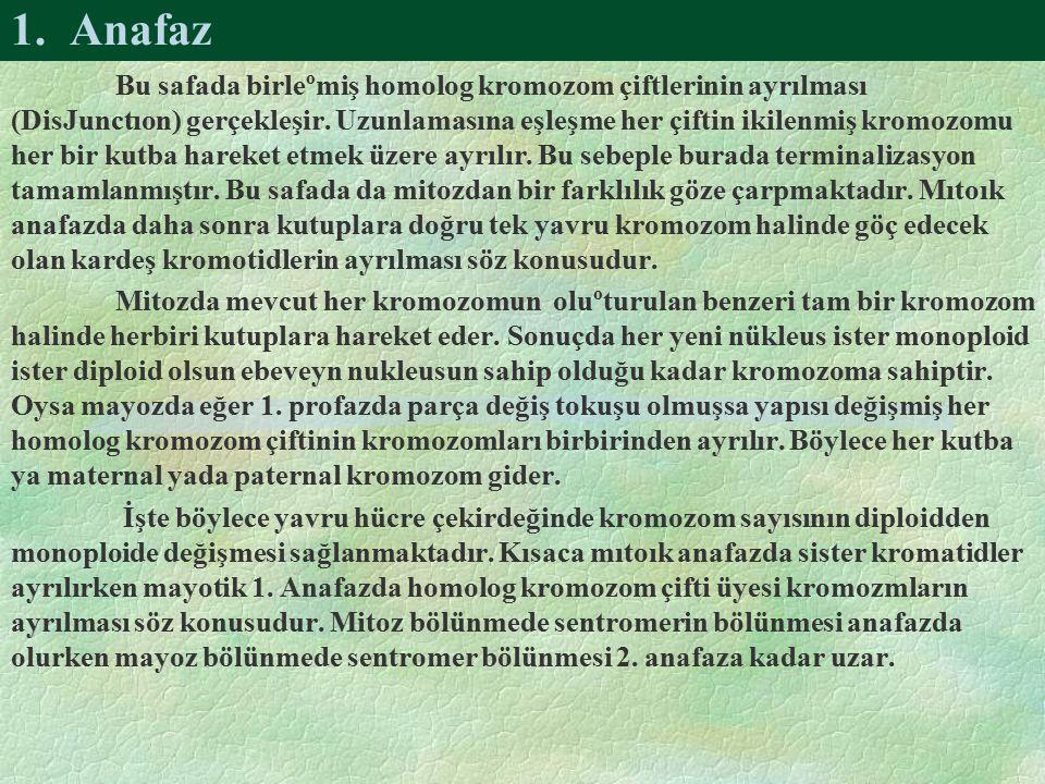 1. Anafaz