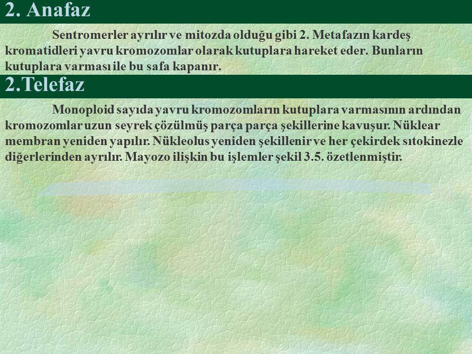 2. Anafaz