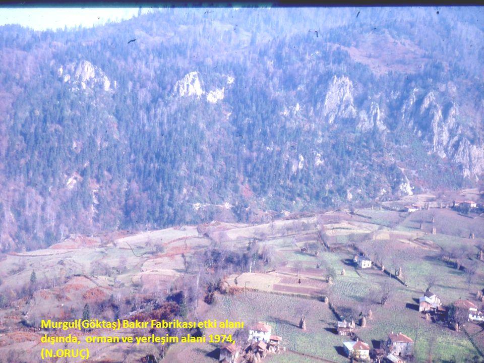 Murgul(Göktaş) Bakır Fabrikası etki alanı dışında, orman ve yerleşim alanı 1974, (N.ORUÇ)