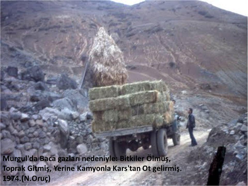 Murgul da Baca gazları nedeniyle: Bitkiler Ölmüş, Toprak Gitmiş, Yerine Kamyonla Kars tan Ot gelirmiş. 1974.(N.Oruç
