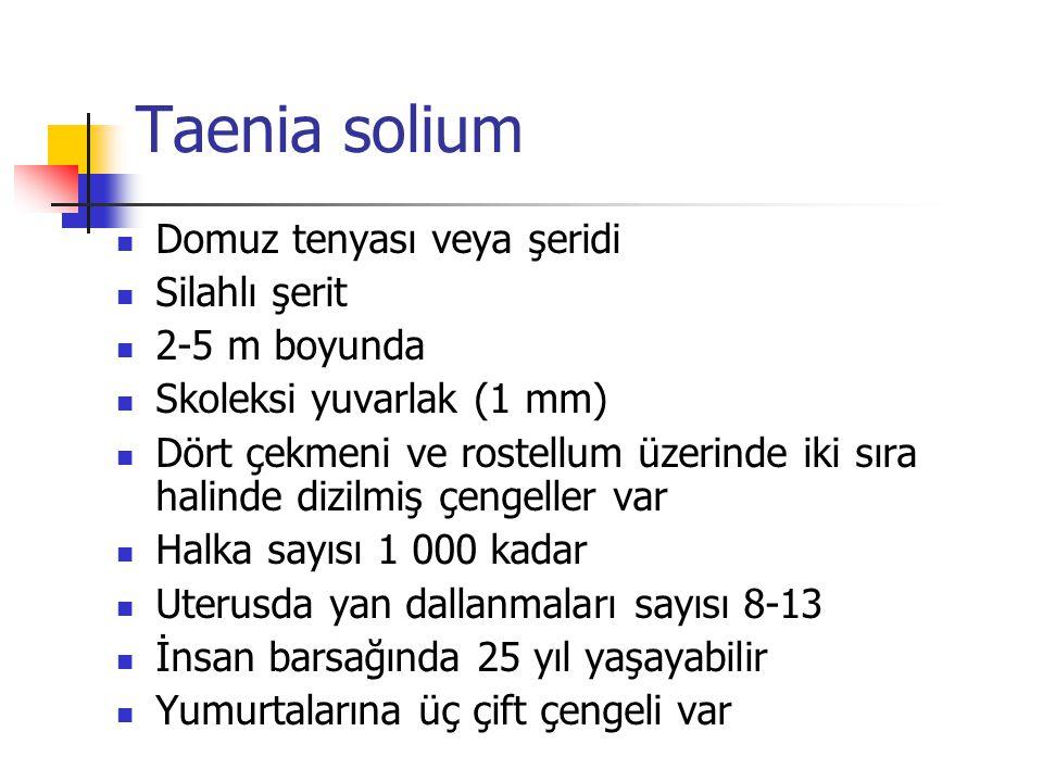 Taenia solium Domuz tenyası veya şeridi Silahlı şerit 2-5 m boyunda