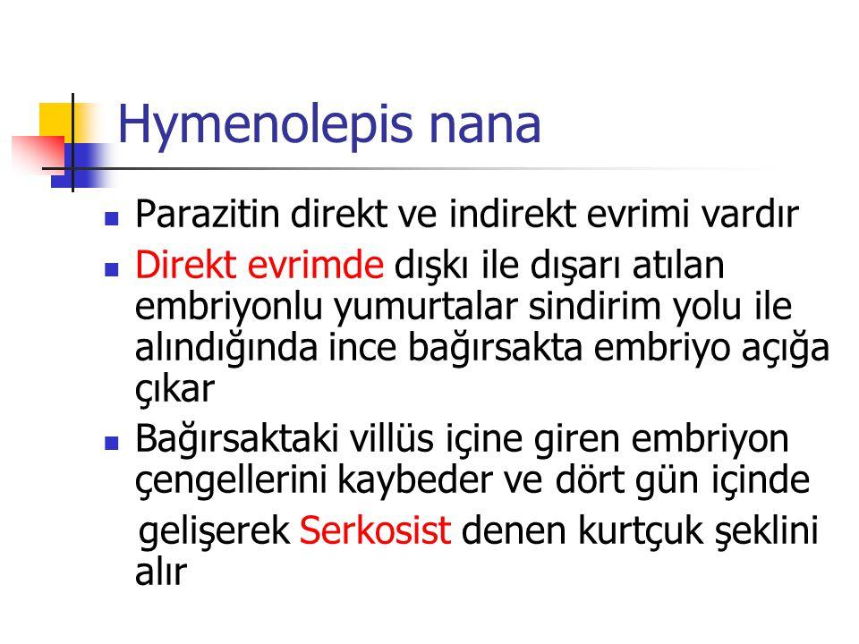 Hymenolepis nana Parazitin direkt ve indirekt evrimi vardır