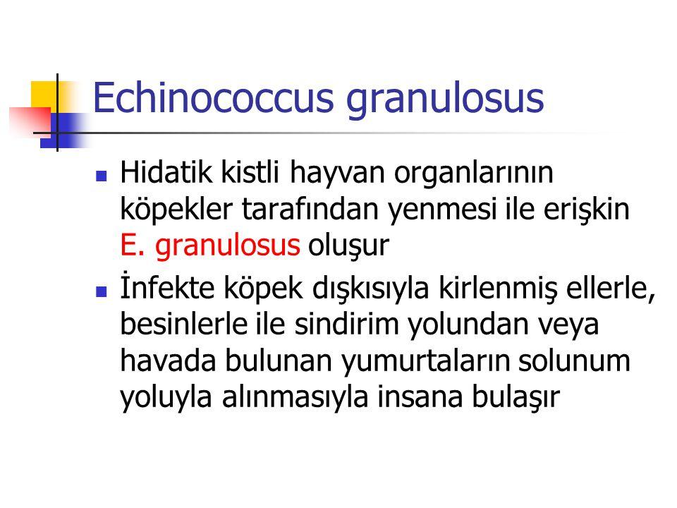Echinococcus granulosus