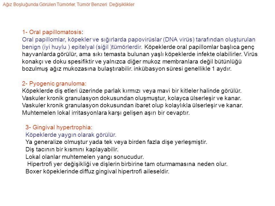 1- Oral papillomatosis: