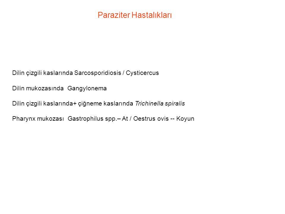 Paraziter Hastalıkları
