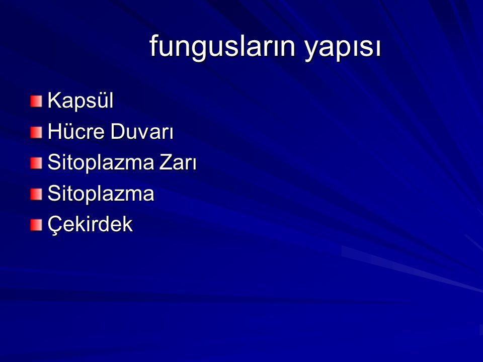 fungusların yapısı Kapsül Hücre Duvarı Sitoplazma Zarı Sitoplazma