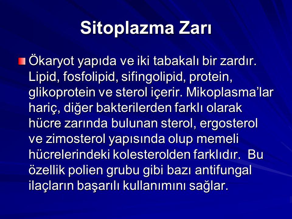 Sitoplazma Zarı