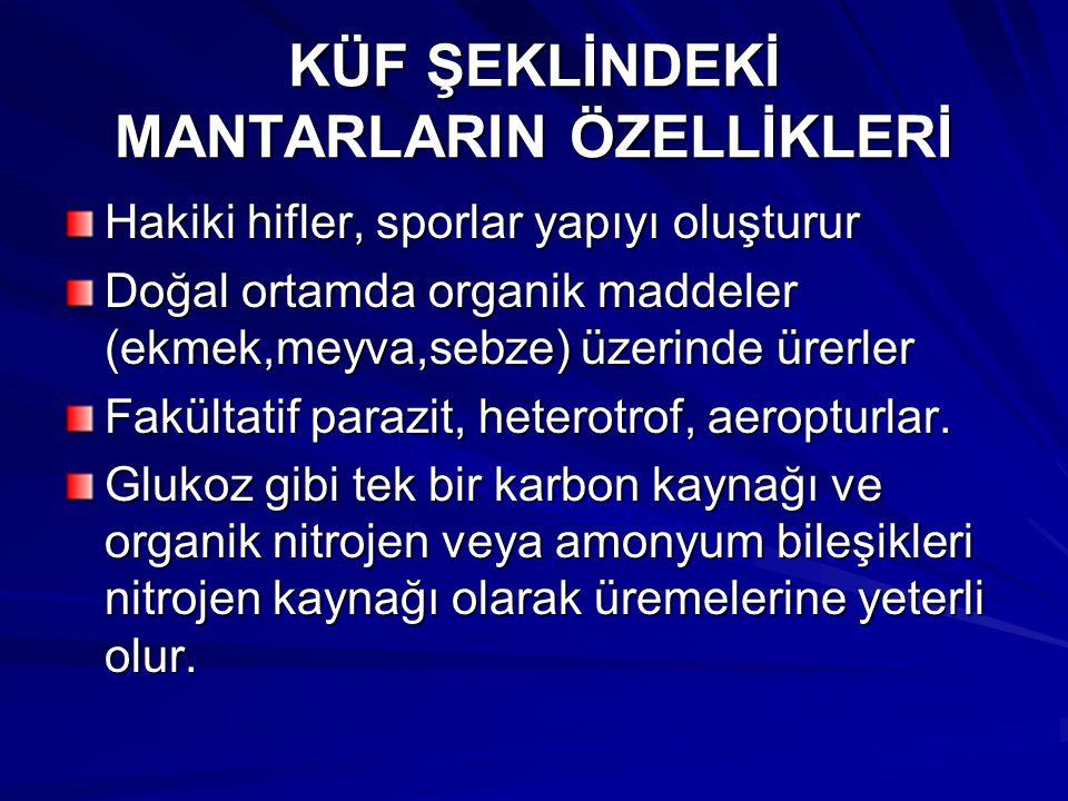 KÜF ŞEKLİNDEKİ MANTARLARIN ÖZELLİKLERİ