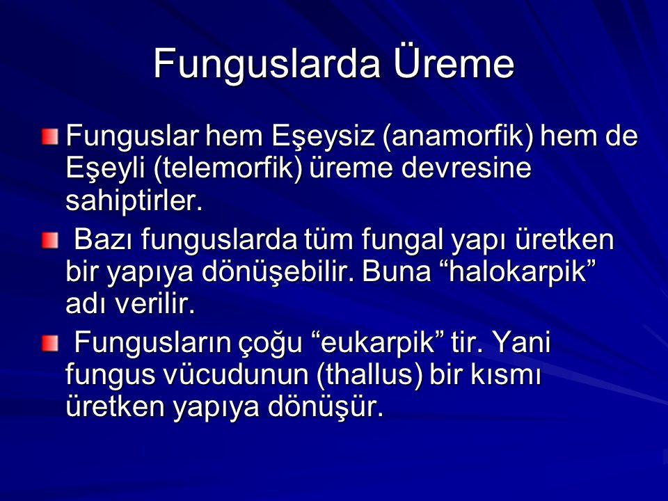 Funguslarda Üreme Funguslar hem Eşeysiz (anamorfik) hem de Eşeyli (telemorfik) üreme devresine sahiptirler.