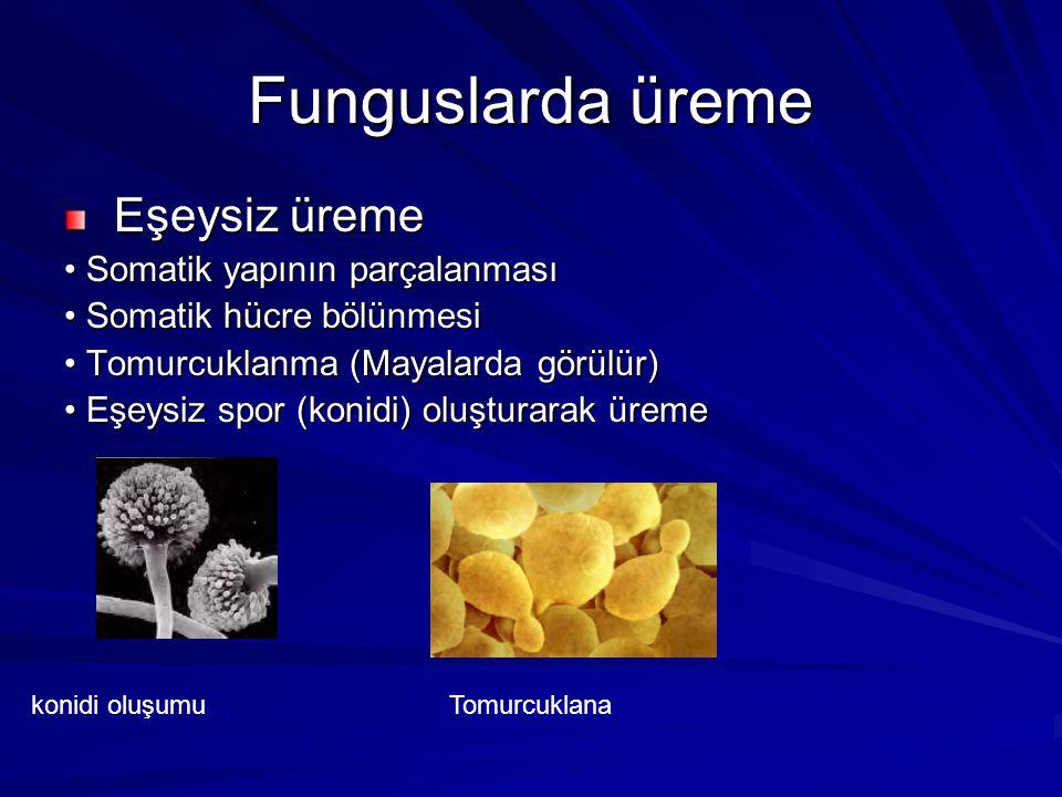 Funguslarda üreme Eşeysiz üreme • Somatik yapının parçalanması