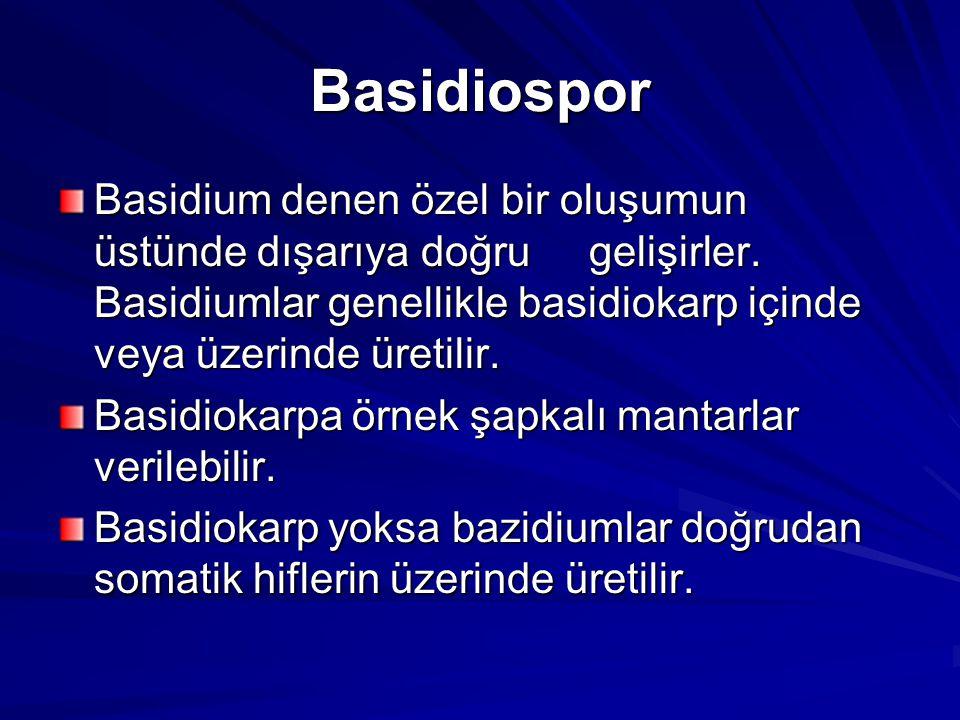 Basidiospor Basidium denen özel bir oluşumun üstünde dışarıya doğru gelişirler. Basidiumlar genellikle basidiokarp içinde veya üzerinde üretilir.