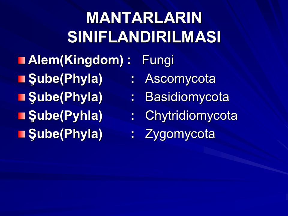 MANTARLARIN SINIFLANDIRILMASI