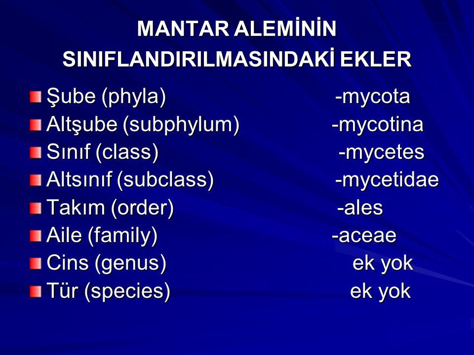 MANTAR ALEMİNİN SINIFLANDIRILMASINDAKİ EKLER