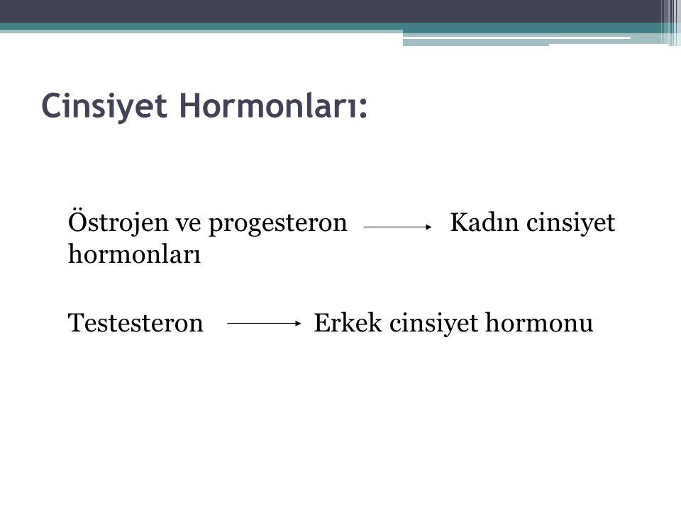 Cinsiyet Hormonları: Östrojen ve progesteron Kadın cinsiyet hormonları