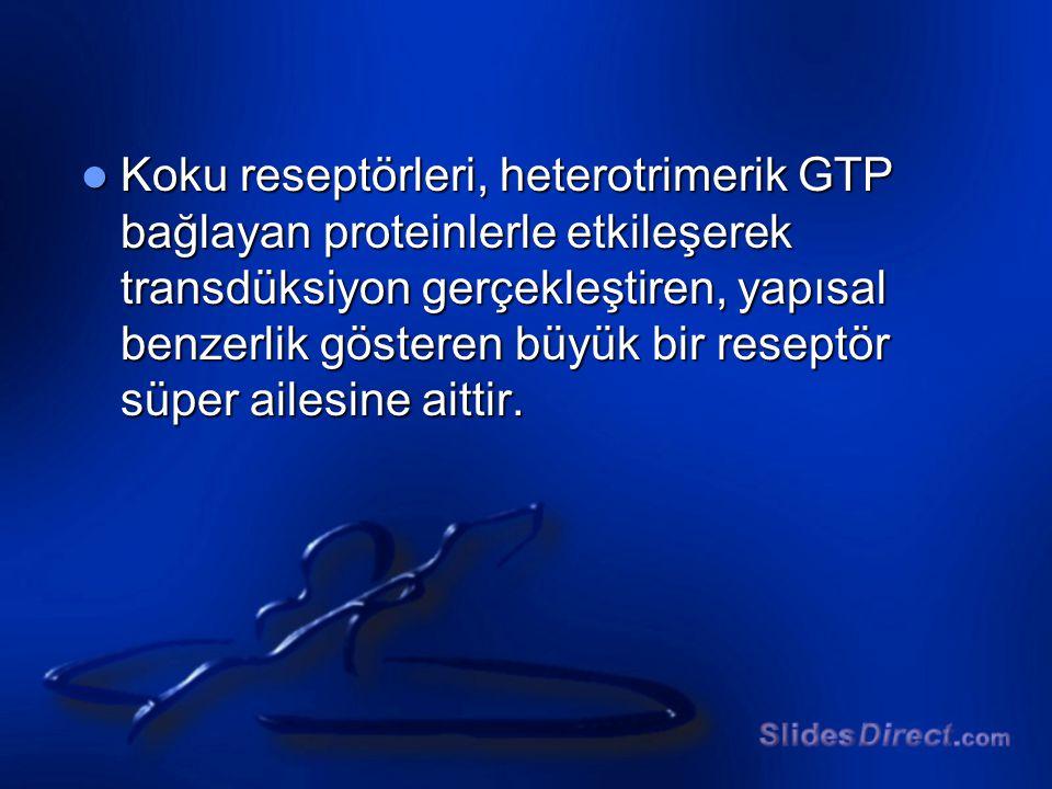 Koku reseptörleri, heterotrimerik GTP bağlayan proteinlerle etkileşerek transdüksiyon gerçekleştiren, yapısal benzerlik gösteren büyük bir reseptör süper ailesine aittir.