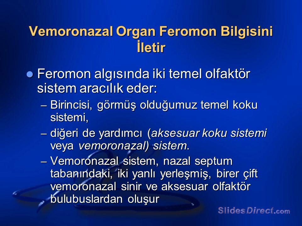 Vemoronazal Organ Feromon Bilgisini İletir