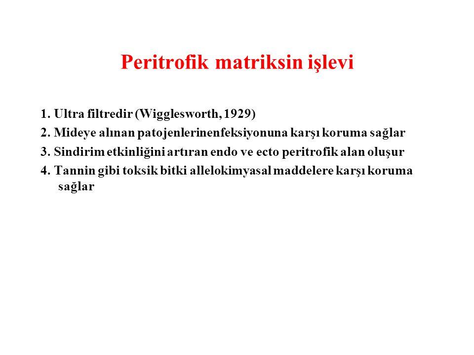 Peritrofik matriksin işlevi