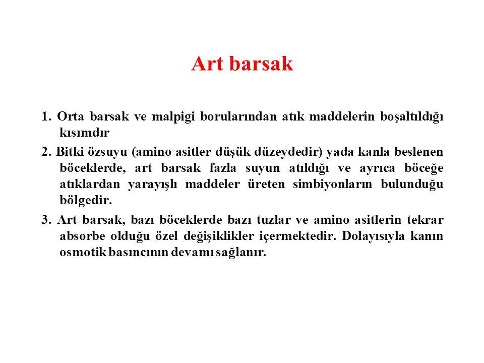 Art barsak