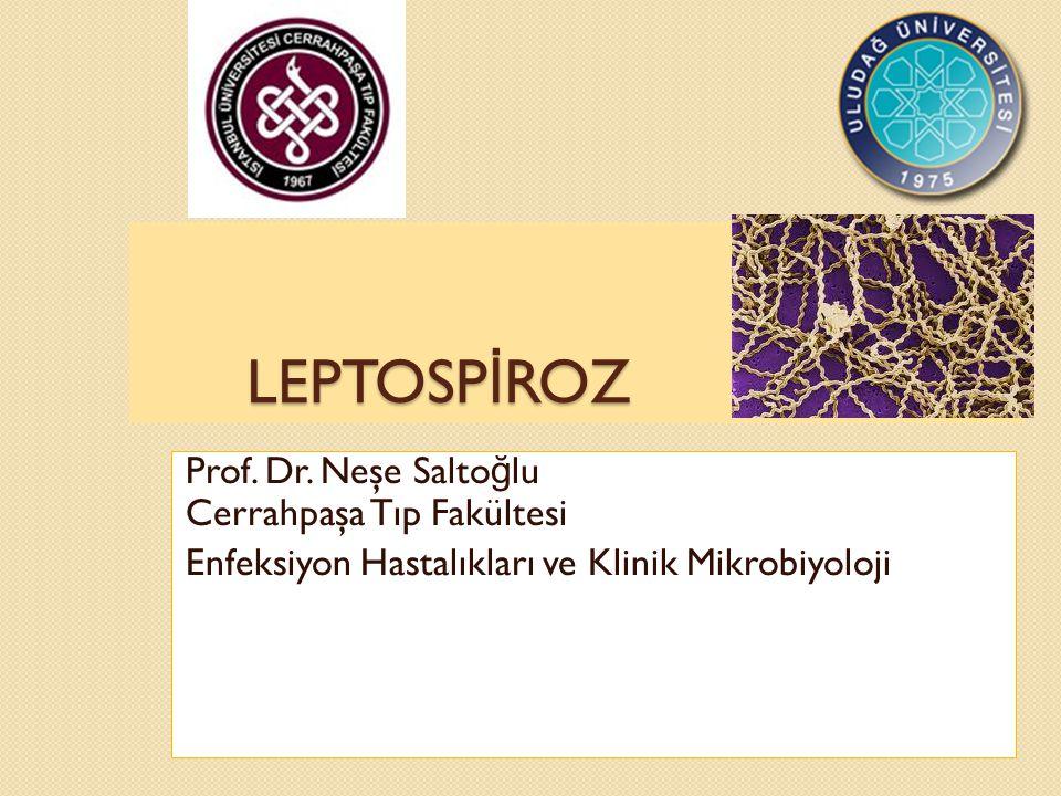 LEPTOSPİROZ Prof. Dr. Neşe Saltoğlu Cerrahpaşa Tıp Fakültesi
