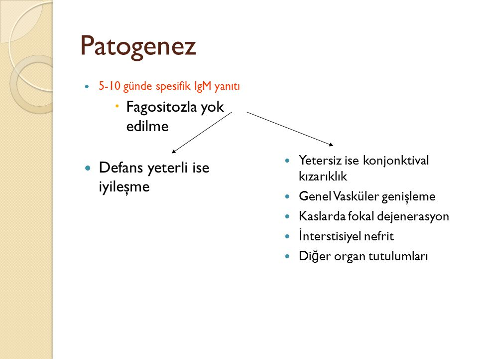 Patogenez Fagositozla yok edilme Defans yeterli ise iyileşme
