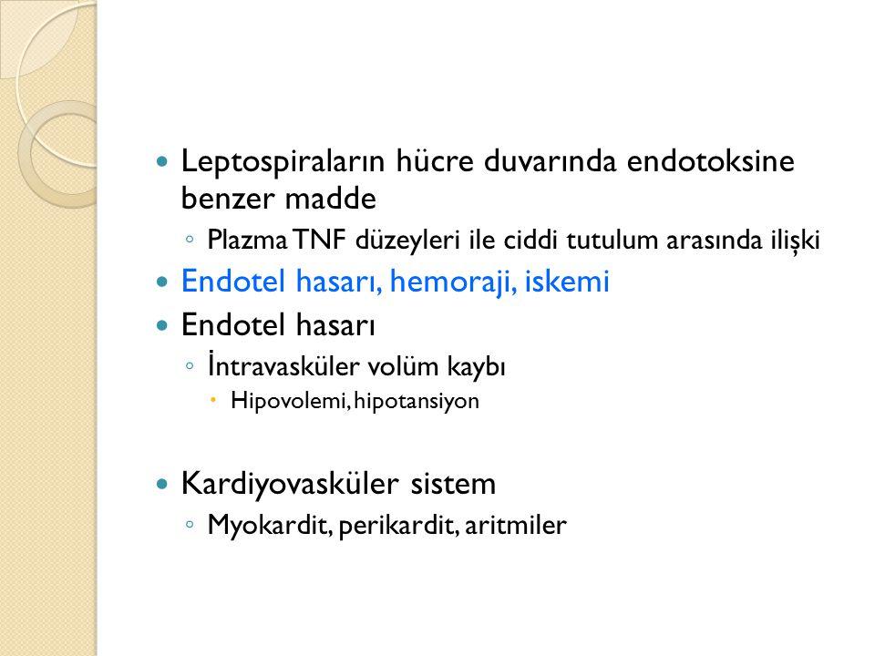 Leptospiraların hücre duvarında endotoksine benzer madde