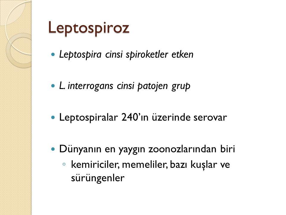 Leptospiroz Leptospira cinsi spiroketler etken