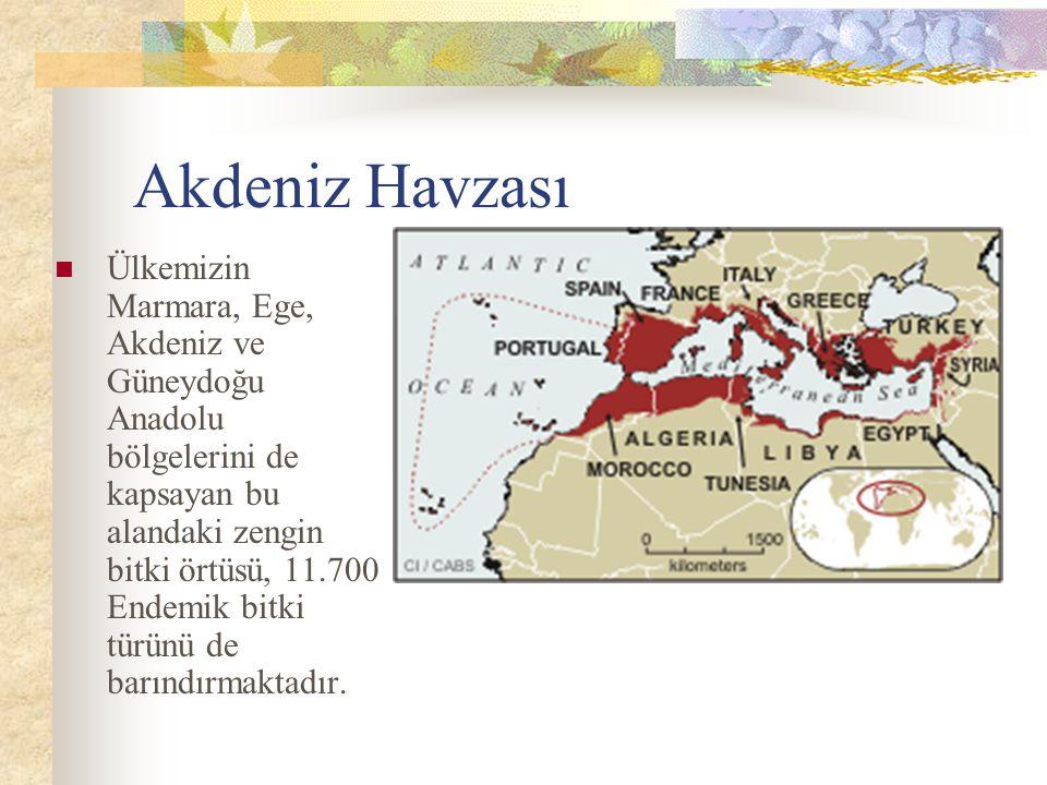 Akdeniz Havzası