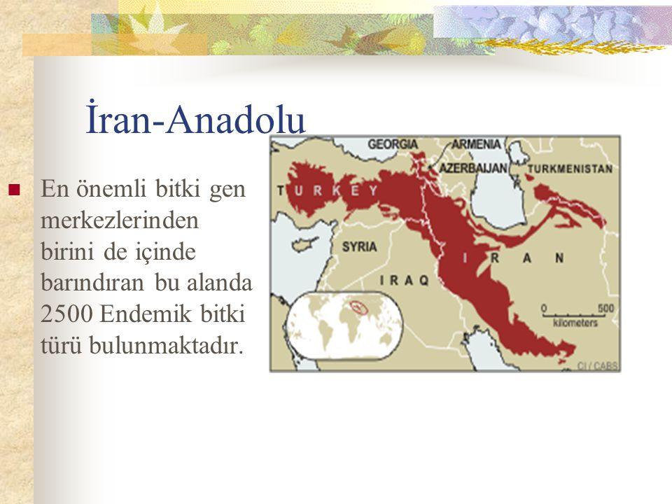 İran-Anadolu En önemli bitki gen merkezlerinden birini de içinde barındıran bu alanda 2500 Endemik bitki türü bulunmaktadır.