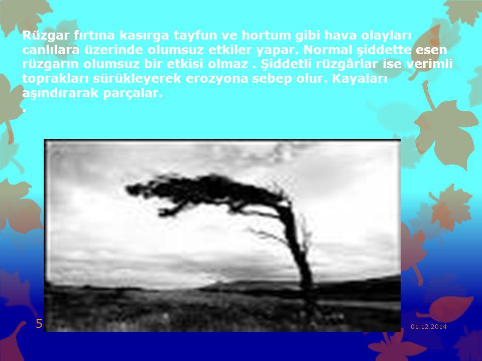 Rüzgar fırtına kasırga tayfun ve hortum gibi hava olayları canlılara üzerinde olumsuz etkiler yapar. Normal şiddette esen rüzgarın olumsuz bir etkisi olmaz . Şiddetli rüzgârlar ise verimli toprakları sürükleyerek erozyona sebep olur. Kayaları aşındırarak parçalar. .