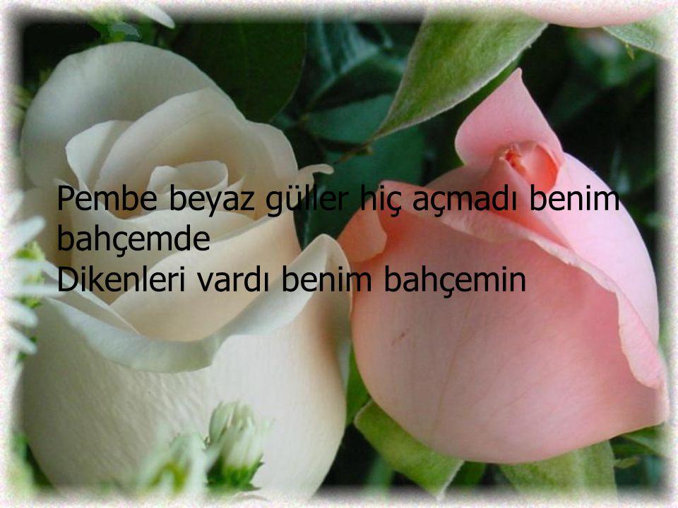 Pembe beyaz güller hiç açmadı benim bahçemde Dikenleri vardı benim bahçemin