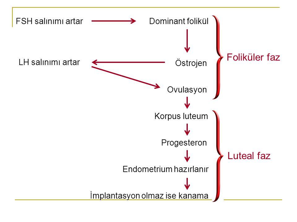 Foliküler faz Luteal faz FSH salınımı artar Dominant folikül