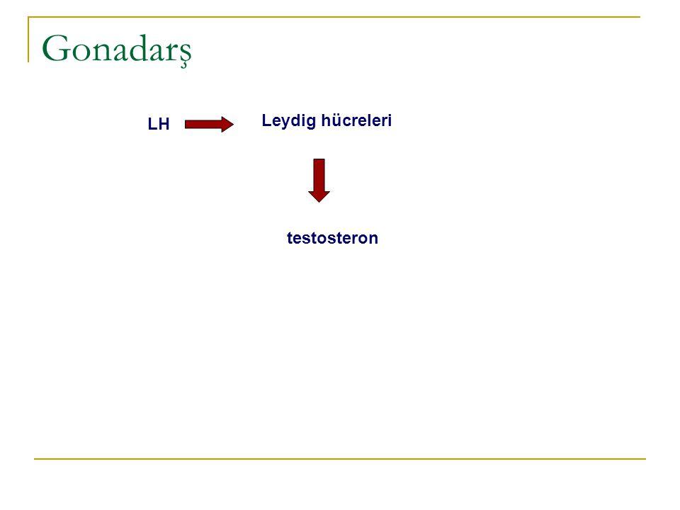 Gonadarş LH Leydig hücreleri testosteron