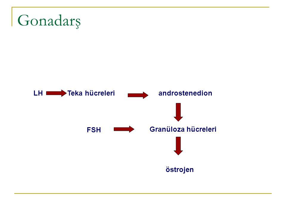 Gonadarş LH Teka hücreleri androstenedion FSH Granüloza hücreleri