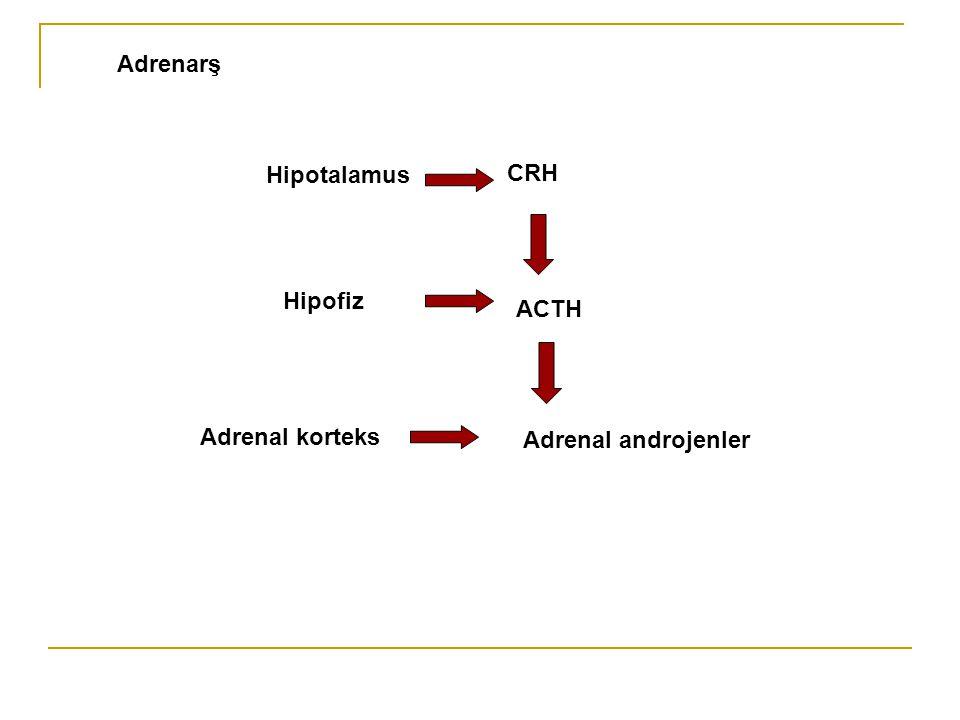Adrenarş Hipotalamus CRH Hipofiz ACTH Adrenal korteks Adrenal androjenler