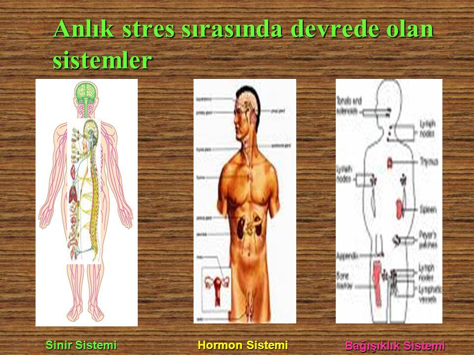 Anlık stres sırasında devrede olan sistemler