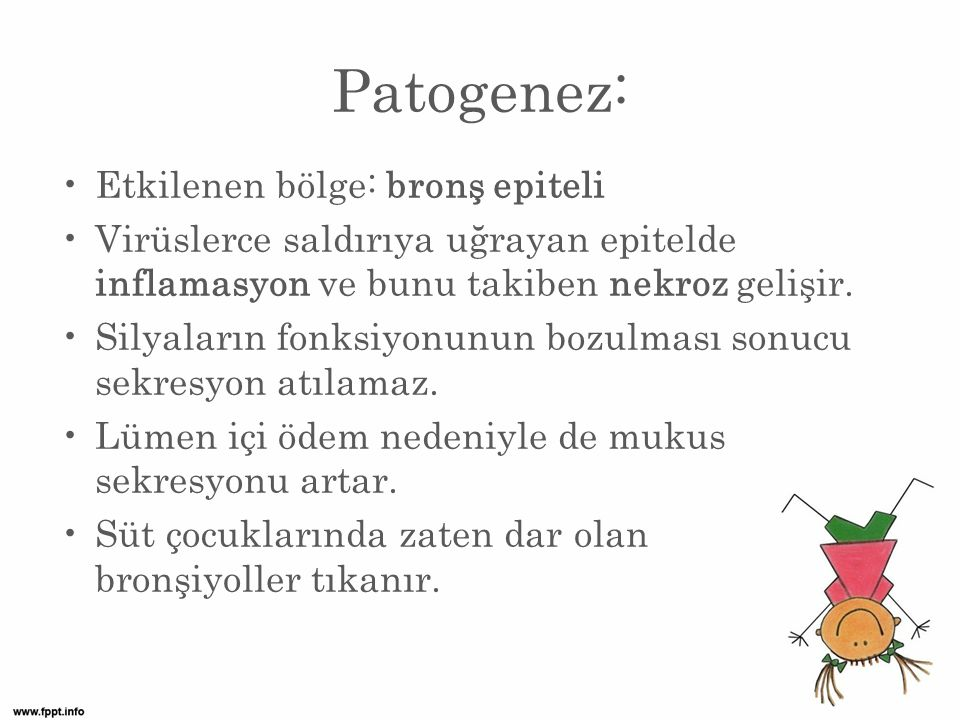 Patogenez: Etkilenen bölge: bronş epiteli