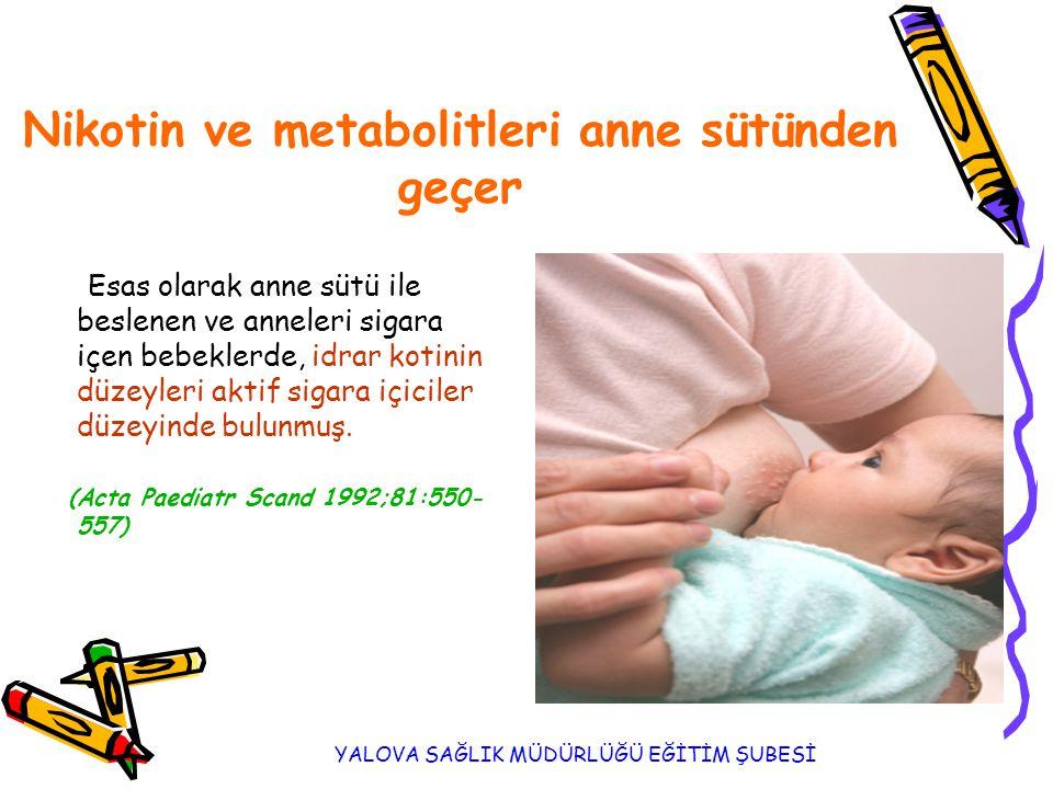 Nikotin ve metabolitleri anne sütünden geçer