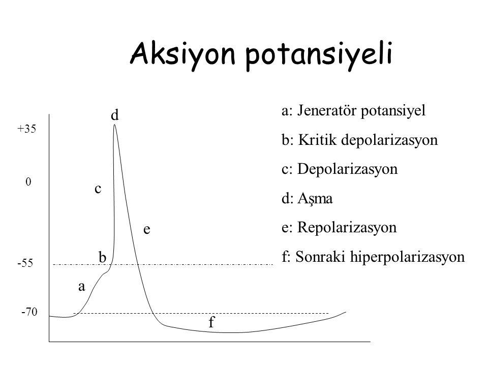 Aksiyon potansiyeli a: Jeneratör potansiyel d b: Kritik depolarizasyon