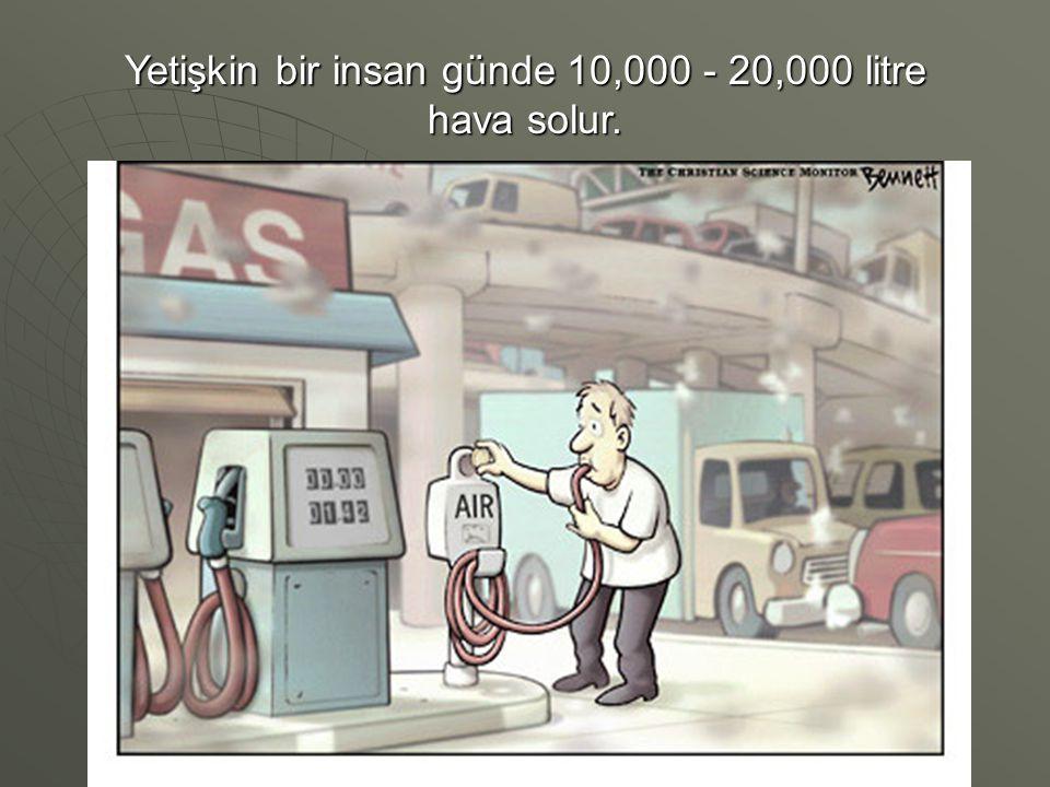 Yetişkin bir insan günde 10,000 - 20,000 litre hava solur.