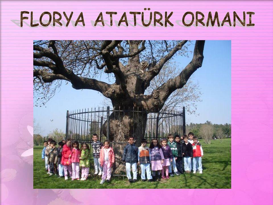 FLORYA ATATÜRK ORMANI