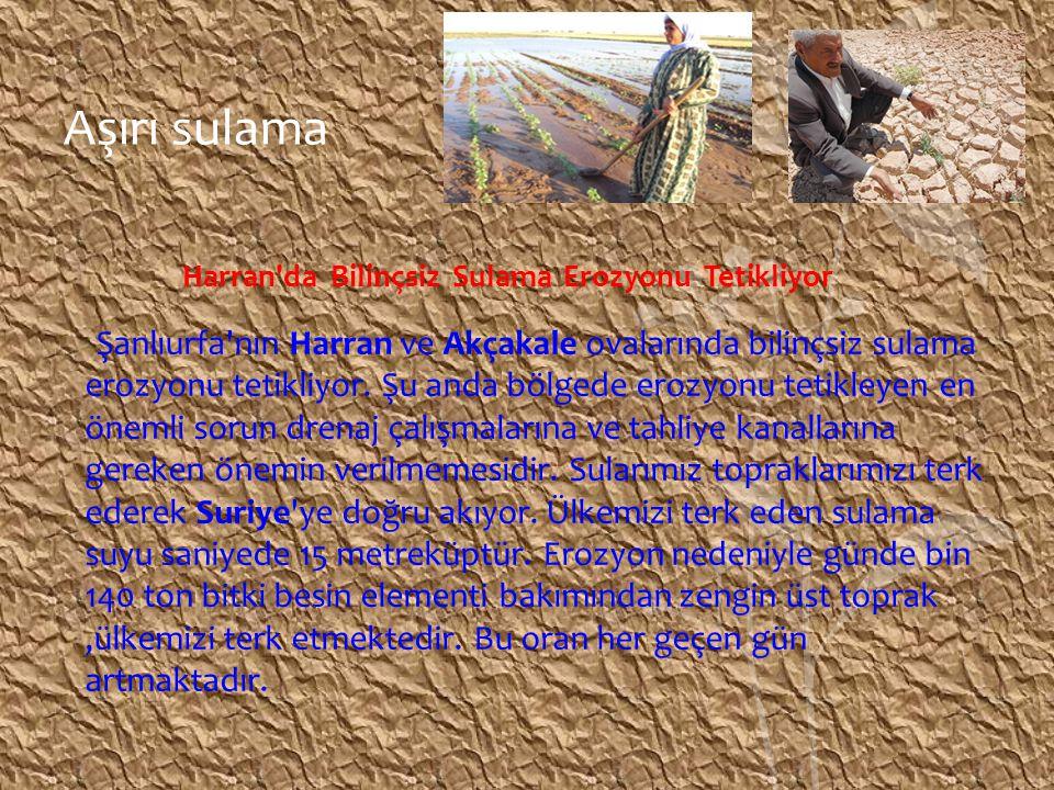 Aşırı sulama Harran da Bilinçsiz Sulama Erozyonu Tetikliyor