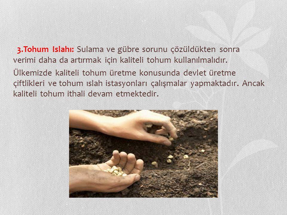 3.Tohum Islahı: Sulama ve gübre sorunu çözüldükten sonra verimi daha da artırmak için kaliteli tohum kullanılmalıdır.